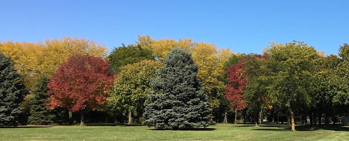 Photo of Fall Foliage